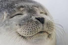 SATISFIED SEALS | Meme Generator via Relatably.com
