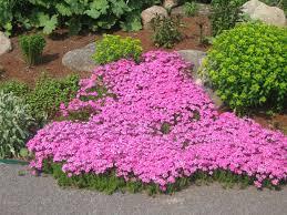 Small Picture Perennial Garden Design Ideas Diy Garden Trends