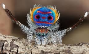 """Résultat de recherche d'images pour """"l'araignée la plus moche du monde"""""""