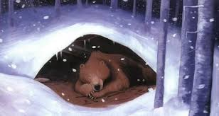 Image result for bear hibernation