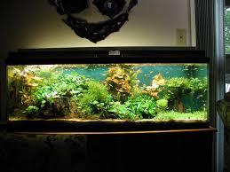 office aquariums 1000 images about aquariums on pinterest aquarium home aquarium and pictures of fish aquarium office