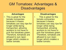 essay about gm crops pros  homework for you  essay about gm crops pros  image