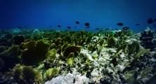 <b>Ocean Girl</b> S01 - Ep01 The <b>Girl</b> in the <b>Sea</b> HD <b>Watch</b> - Dailymotion ...