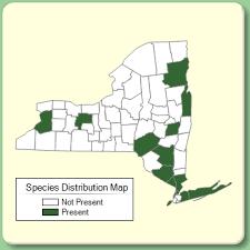 Rosa micrantha - Species Page - NYFA: New York Flora Atlas