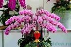Как ухаживать phalaenopsis в домашних условиях