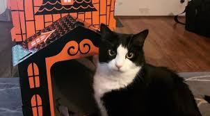 Хэллоуинские домики для кошек | Pro Handmade