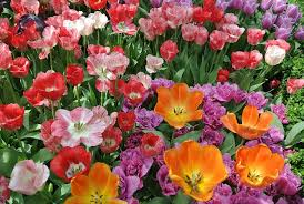 Image result for image for blooming flower