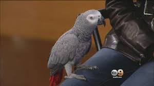 country singer bird lover laura bryna says parrot sanctuary is country singer bird lover laura bryna says parrot sanctuary is helping heal veterans
