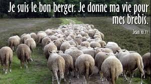 """Résultat de recherche d'images pour """"bon berger"""""""