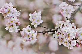spring season essay for kids spring season urdu essay mausam bahar ka my favourite season in  beautiful free