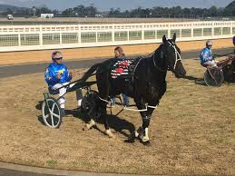 andrew haack andrewwhaack twitter stone of destiny showing no signs of the long layoff wouldn t blow a candle out cobwebs gone hoping for a win soon for his loyal ownerspic com