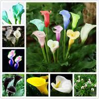 Common Bulb Flowers Online
