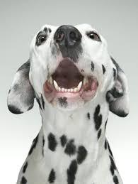 Τι συμβαίνει στα δόντια των Toys dogs;...