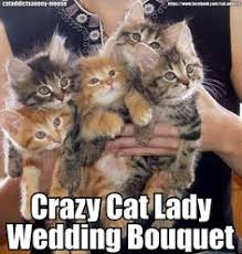 Crazy Cats on Pinterest | Cat Vs Human, Funny Cute Kittens and ... via Relatably.com