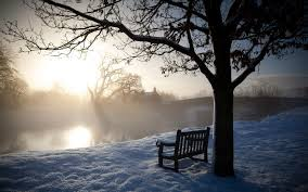 Image result for trees in winter images