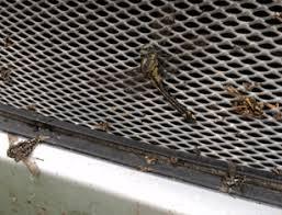 Очиситка <b>кузова</b> от следов <b>насекомых</b>