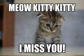 MEOW KITTY KITTY I MISS YOU! - Sad Kitten - quickmeme via Relatably.com
