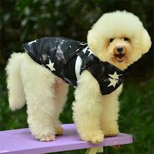 $1.99 Wholesale <b>Dog Clothes</b>,Shoes,<b>Dog</b> Collars <b>FREE SHIPPING</b>