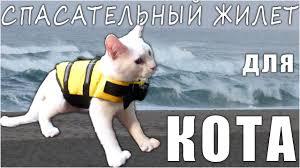 Спасательный <b>Жилет</b> для Кота или <b>Собаки</b> с Aliexpress (Cat Dog ...