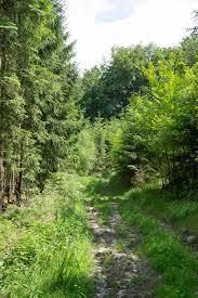 Östlicher Teutoburger Wald