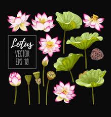 <b>Leaves Lotus Leaf</b> Vector Images (over 490)