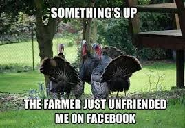 Image result for Thanksgiving funny picture