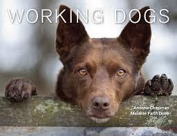 """""""Δουλεύουν όλοι σαν τα  ζώα."""".."""