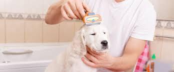 Как выбрать настоящий <b>фурминатор для собаки</b> — советы в ...