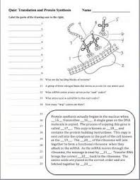 ideas about dna synthesis on pinterest  functional group  dna deoxyribonucleic acid rna protein synthesis quizzes set of