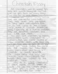 cheetah essay contest   quotwhy should we save cheetahsquot   cheetah  emily sugg