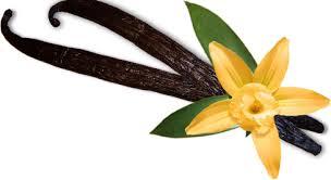 Exquise vanille : les secrets de cette épice au parfum envoûtant