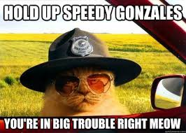 Hold up Speedy Gonzales You're in big trouble right meow - Officer ... via Relatably.com
