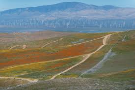 how we roll 3 a proposal to raise the gas tax and the poppies solar panels wind mills and the tehachapi mountains as seen from the california poppy reserve near lancaster photo courtesy steve hymon