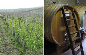 left gaglioppo vines at one of calabrias star producers sergio arcuri right calabria stainless steel