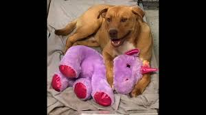 <b>Dog</b> tried five times to steal stuff <b>unicorn</b> from NC store   Raleigh ...