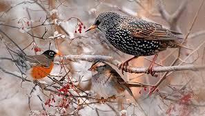 Зимующие птицы. Названия, описания и особенности зимующих ...