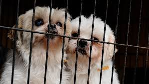 Puppy Mill Action Week: How You Can Help Fight Puppy Mills ...