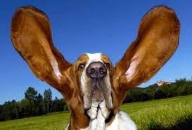 Tι εκδηλώνουν οι μύες στα αυτιά;