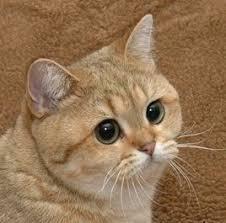 Cats   Know Your Meme via Relatably.com