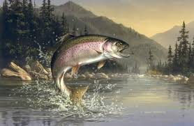 Image result for rainbow trout fish
