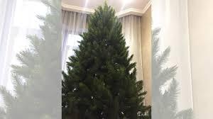 <b>Сосна Triumph Tree</b> Серебряный бор купить в Москве с ...