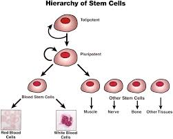 essay on cells