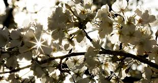 First day of <b>spring</b>: Here's what you should know about the <b>spring</b> ...