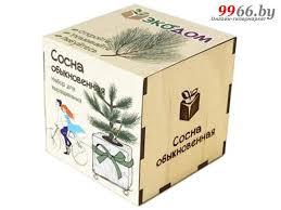 <b>Растение ЭкоДом Сосна</b> обыкновенная 1061843804483, цена 31 ...