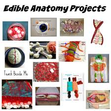 edible education projects teach beside me edible anatomy projects