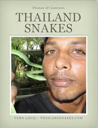 5 Dangerous <b>Venom Types</b> - Thailand Snakes | ThailandSnakes