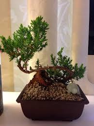 gabrielle office 1 bonsai bonsai tree office table