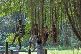 Image result for banyan tree photos