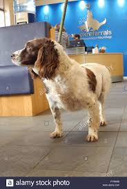 fitzpatrick stock photos fitzpatrick stock images alamy meg at fitzpatrick referrals not happy springer