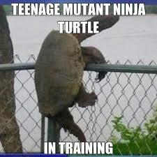 WRONG HOLE!! - turtle - quickmeme via Relatably.com